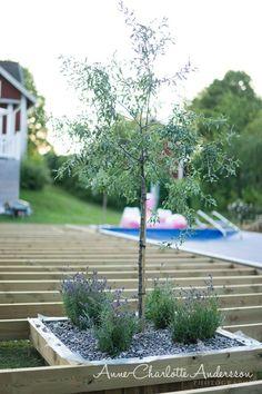 Should You Opt for Outdoor Bench Seats? Outdoor Life, Outdoor Gardens, Landscape Design, Garden Design, Spa Lounge, Backyard Paradise, Interior Garden, Diy Pergola, Garden Planning
