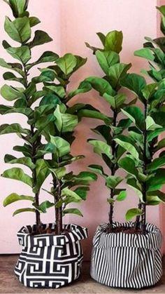 Sun Plants, Potted Plants, Garden Plants, House Plants Decor, Plant Decor, Shadow Plants, Diy Home Crafts, Hanging Plants, Home Decor Styles
