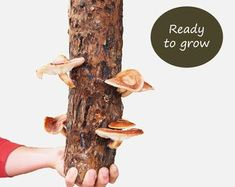 Keep your secrets safe inside: Skeleton Key Locking Leather Journal by Binding Bee Secret Safe, The Secret, Wood Logs, Natural Lifestyle, Leather Journal, Natural Wood, Stuffed Mushrooms, Etsy, Handmade