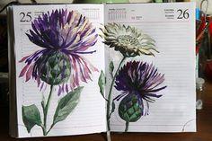 by Vaneeva, those darn thistles. Sketch Journal, Artist Journal, Artist Sketchbook, Art Journal Pages, Art Journals, Journal 3, Watercolor Flowers, Watercolor Art, Photo Polaroid