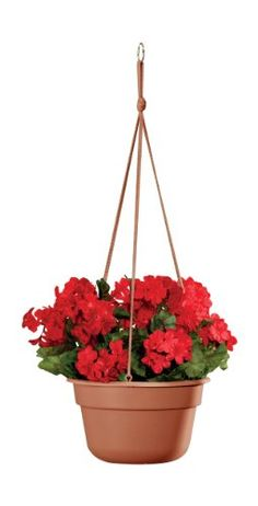 http://laughingrhino.us/10-inch-hanging-basket-pot-by-miles-kimball-p-11762.html