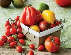 6 Tomatoes Recipes - Need this for when all our tomatoes ripen!
