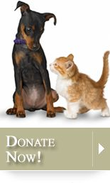 Fundinco.org and The Anti-Cruelty Society of Chicago are teaming up to fundraise to rescue even more animals!