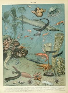 Adolphe Millot (1857–1921) - Ocean