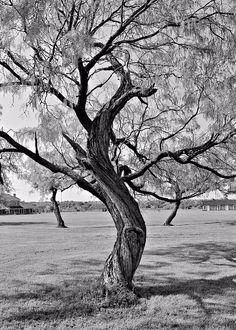 twisted-tree-elizabeth-budd.jpg (642×900)