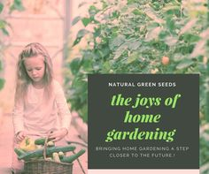 Home Grown Vegetables, Organic Seeds, Home And Garden, Bring It On, Herbs, Natural, Green, Herb, Nature