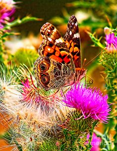 Skyline Butterfly/ when I see the intricate beauty of nature I must acknowledge and praise the God of all creation! Butterfly Chrysalis, Butterfly Species, Beautiful Butterflies, Beautiful Flowers, Sting Like A Bee, Good Day Sunshine, A Bug's Life, Winter Scenery, Parcs