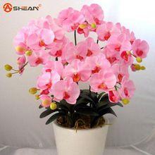 Розовый Фаленопсис Орхидея Семена Семена цветов Крытый Бонсай Орхидеи 100 частиц/lot(China (Mainland))