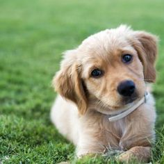 Puppy laying on grass field.