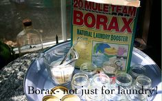 Waging War on Ants Ant Killer Borax, Borax For Ants, This Means War, Get Rid Of Ants, Pet Safe, Home Health, Natural Cleaning Products, Farm Life, Organic Gardening