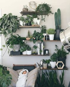 72 Most Amazing Indoor Plants Wall Garden Decoration Ideas - Plant Wall Decor Design 29 Indoor Plant Wall, Plant Wall Decor, House Plants Decor, Indoor Plants, Garden Plants, Green Wall Decor, Succulent Plants, Water Plants, Diy Bedroom Decor