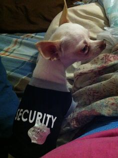 Security Pup