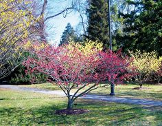 WSHG.NET | Put on Your Winter Bloomers | Featured, For The Garden | November 20, 2014 | WestSound Home & Garden