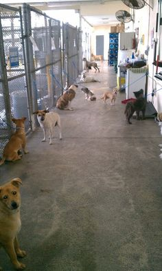 """Intake"" *** Just your average day at any US ""shelter."" One day. One shelter. Dogs dumped by their loser ""owners."" Some will make it out. Unfortunately, for most dogs this moment will be the beginning of the end (this is a kill shelter); unless networked, shared, pledged for, pulled by rescue/foster in hopes of finding them a FURever home... How could anyone walk away? Could you? Good, healthy, loving, heart-broken, betrayed animals sit waiting at your local shelter. ADOPT. FOSTER. VOLUNTEER."