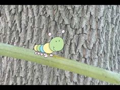 How a Caterpillar Becomes a Butterfly?  #Education #Kids #Science #Biology #Butterfly