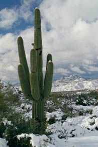 Rare snow storm in the desert of Arizona.