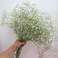 White Babys Breath   Grower's Bunch by Weight Approx 5-8 stems  [/$14.99]