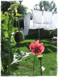 Laundry on the clothes line ♥