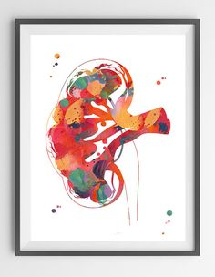 Kidney section watercolor print human anatomy by MimiPrints
