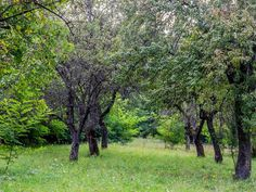 #countrylife #romania #fagaras Country Life, Romania, Places, Country Living, Lugares, Res Life