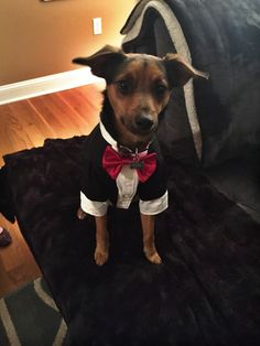 I be on my suit and tie shit tie shit   http://ift.tt/2mHixFk via /r/dogpictures http://ift.tt/2mTlXBv  #lovabledogsaroundtheworld