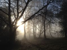 A misty morning just below Holmbury Hill