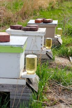 How to Get Started with Honeybees The Prairie Homestead The Farm, Mini Farm, Small Farm, Potager Bio, Raising Bees, Homestead Farm, Save The Bees, How To Keep Bees, Hobby Farms