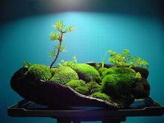 真不错 - simple but beautiful moss covered rocks with carefully placed plants.