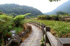 陽明山竹子湖│Taiwan Travel Guide