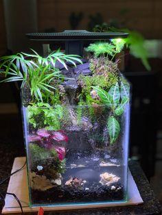 Home Aquarium, Aquarium Fish, Shrimp Tank, Moss Garden, Paludarium, Aquaponics, Fish Tank, Bonsai, Habitats