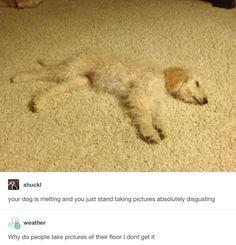 On camouflage: | 23 Tumblr Posts About Dogs That You Won't Get Through Without Smiling