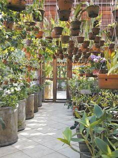 Best Greenhouse Ideas For Beginners - Indignant corgi Side Garden, Garden Pots, Water Wall Fountain, Orchid House, Best Greenhouse, Garden Shelves, Shade House, Growing Orchids, Orchids Garden