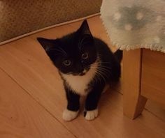 Cats for adoption - RSPCA Manchester & Salford