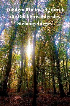 DER RHEINSTEIG ist einer der schönsten Fernwanderwege Deutschlands. Insbesondere die drei NRW-Etappen des Steigs lassen Wanderer in Rheinromantik schwelgen. Und durch neu aufgeforstete Buchenwälder wandern....