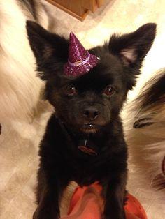 Halloween pup Paco