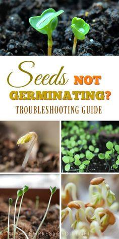 Seeds not germinating or growing well? This troubleshooting guide will help. #garden #seeds #seedstarting #growyourown #gardentips #beginnergardeners #sowseeds