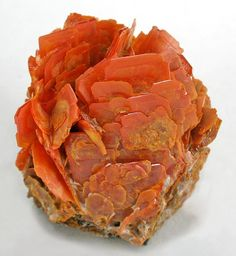 A rosette arrangement of orange-red Wulfenite crystals found near Urumqi, Kuruktag Mts., Xinjiang Uygur Region, Northern China