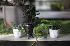 looks complicated but super easy and low key DIY project to set up virtually indestructible houseplants for you to enjoy!