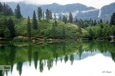 trees - Pinned by Mak Khalaf Landscapes forestgreenreflectionreflectionstreetreeswater by mzengin