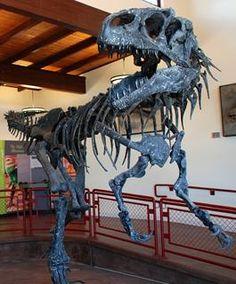 Allosaurus fragilis  From the Jurassic in Utah