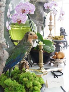 Fabulous!  Orchids and parrots!  Love!