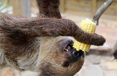 Sloth at Wild Florida Wildlife Park