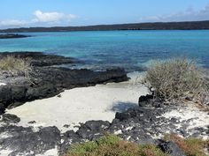 Galapagos Islands Cruise - Sandy Beach and Marine Iguana