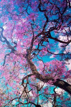 Flowering tree iPhone HD Wallpaper