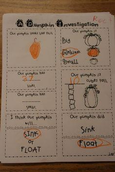 pumpkin investigation- so wanna do this in the activity room when we do our pumpkin activities! 1st Grade Science, Kindergarten Science, Teaching Science, Kindergarten Classroom, Teaching Ideas, Mad Science, Student Teaching, Elementary Teacher, School Holidays