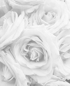 White white roses on white White Roses Wallpaper, Nights In White Satin, Aesthetic Pastel Wallpaper, Love Rose, Bad Girl Aesthetic, Minimal Fashion, Minimal Style, Beautiful Roses, White Flowers
