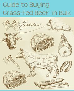 Guide to Buying Grass-Fed Beef in Bulk — A Girl Worth Saving