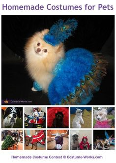 Homemade Costumes for Pets - a lot of DIY costume ideas!
