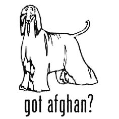 Got Afghan Hound Dog Decal Sticker  BallzBeatz . com