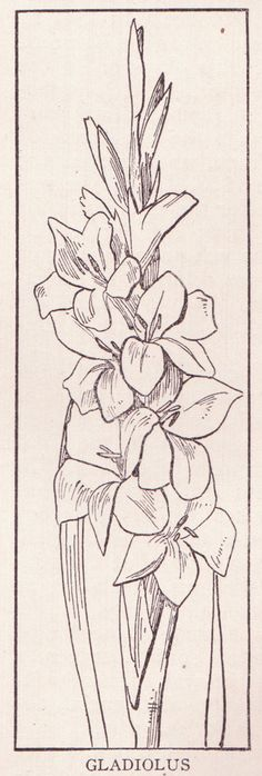 """Gladiolus page domain book """"The Home and School Reference Work"""" Volume III by The Home and School Education Society, H. Dixon, President and Mana. Flower Coloring Pages, Coloring Book Pages, Coloring Pages For Kids, Coloring Sheets, Flower Drawing Images, Zentangle, Gladiolus Flower, Painting Patterns, Amazing Flowers"""